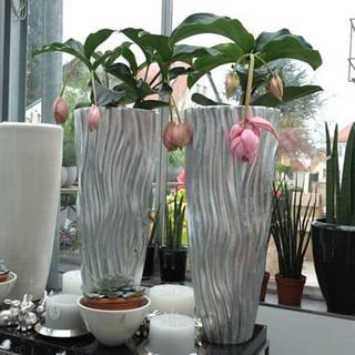 Gefäße & Bepflanzungen